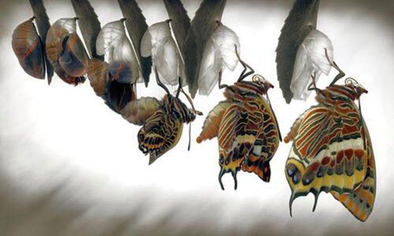 Con bướm và cái kén